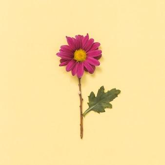 Розовый цветок на желтом столе
