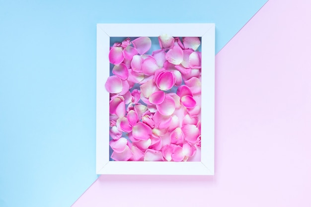 Pink flower petals in frame over dual colored background