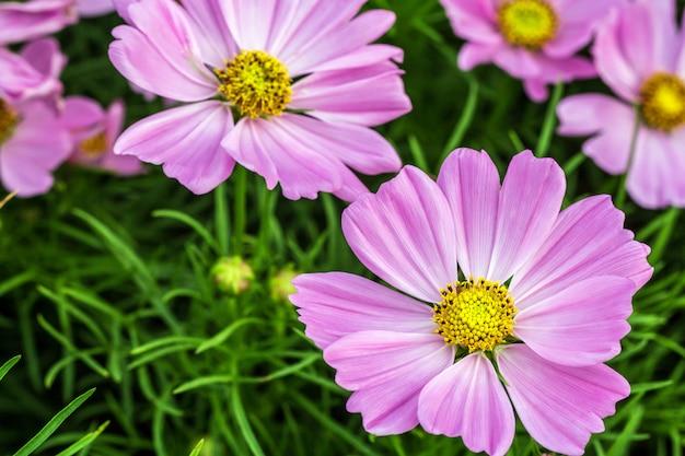 複数のレイヤーのピンクの花びら