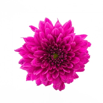 Pink flower on a white background