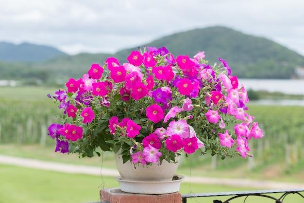 Розовый цветок с горой позади