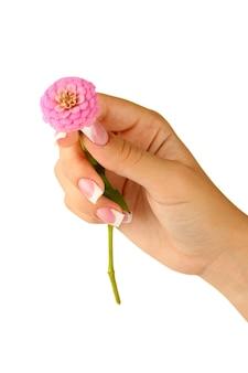 흰색 바탕에 여자의 손으로 핑크 꽃