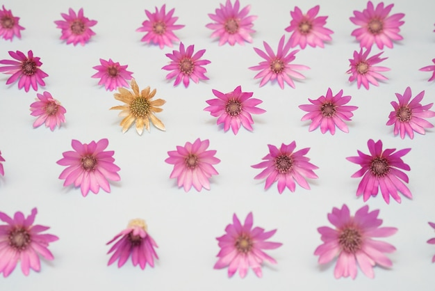 Pink flowers on a background pattern as an idea