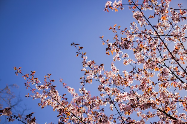 Pink flowers on branch with blue sky