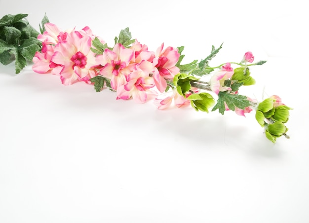 Pink flowers in a branch