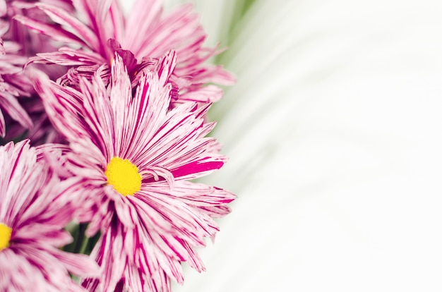Pink flowers of chrysanthemum in a bouquet with green leaves close-up on a white background.