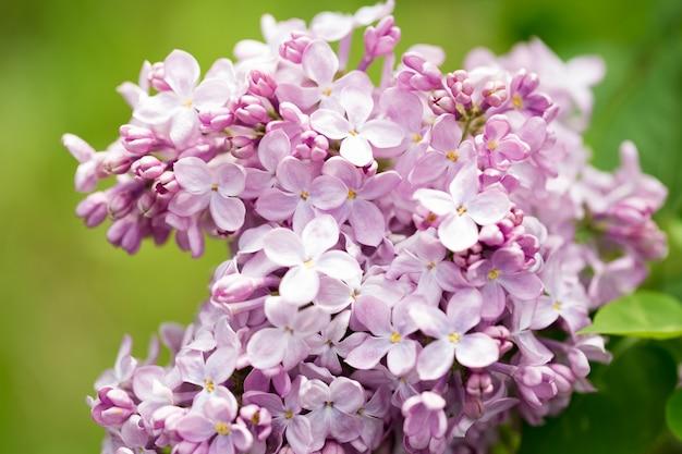 Розовые цветы крупным планом на размытом фоне