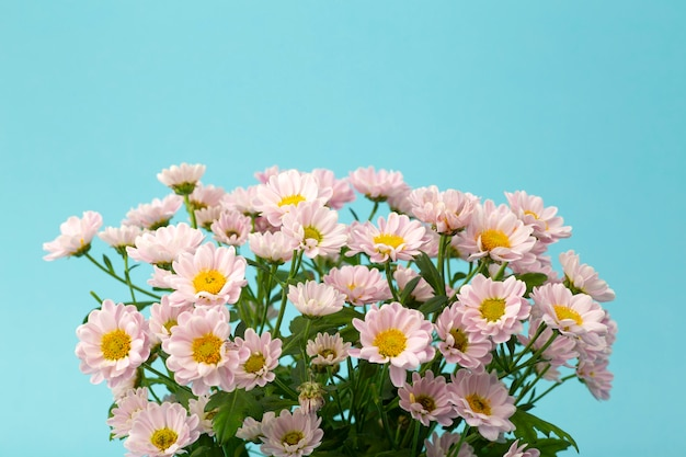 Pink flowers on a colored minimal background. floral background concept