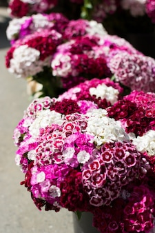 Pink flowers at farmers market