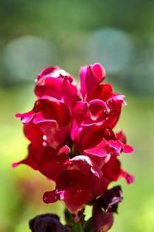 Pink flowers growing in a flowerbed