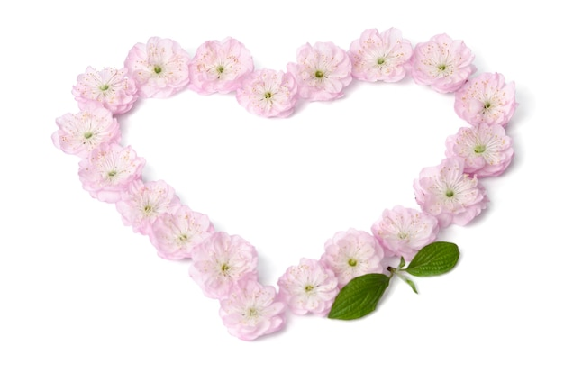 Pink flowers in heart shape on white surface