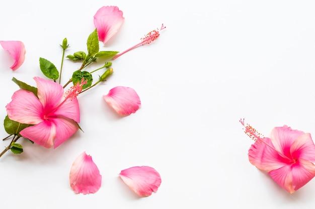 ピンクの花ハイビスカスアジアの地元の植物相