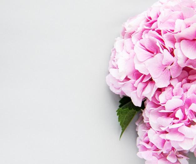Pink flowers of hydrangea