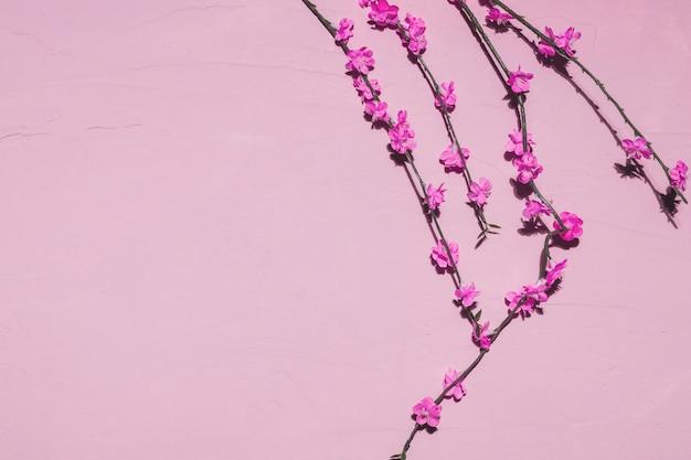 지점에 핑크 꽃