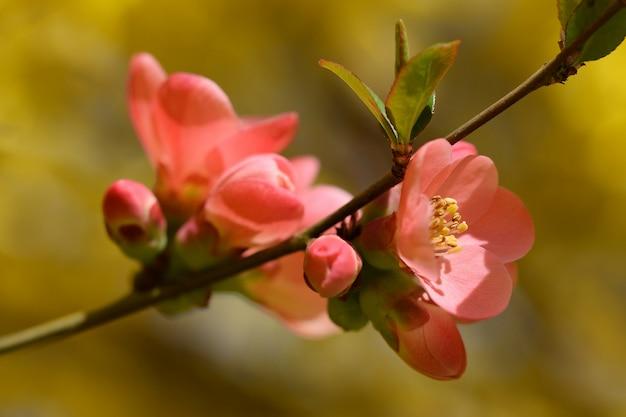 «розовые цветы в крупном размере»