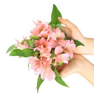 白の上に分離されたピンクの花ユリ