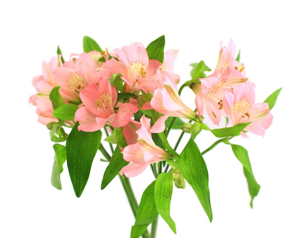 Pink flowers lily