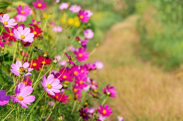 フィールドパスの脇にあるコスメヤのピンクの花