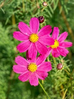 コスメヤのピンクの花のクローズアップ