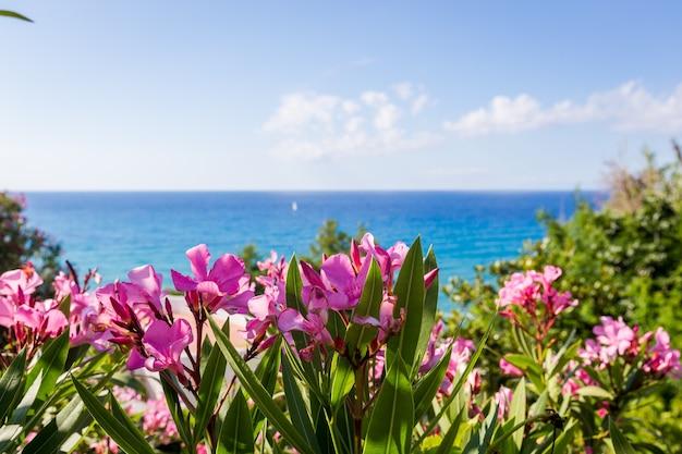 바다 근처 서양 협죽도의 핑크 꽃