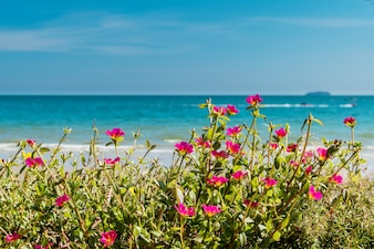 Pink flowers on a background of blue sea