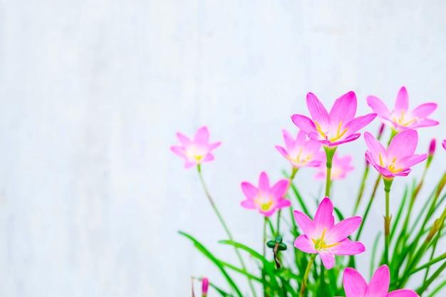 흰색 바탕에 분홍색 꽃