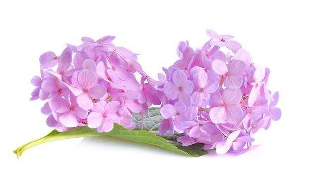 白い表面にピンクの花