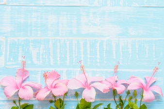 Pink flowers on blue wooden background. Spring and summer concept.
