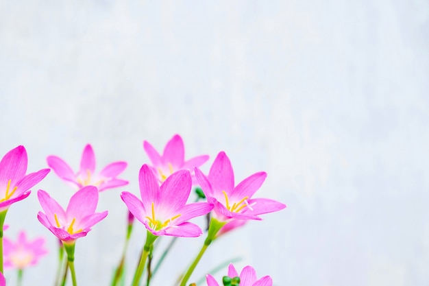핑크 꽃 화이트
