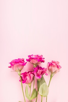 Pink flowers on pastel colored background