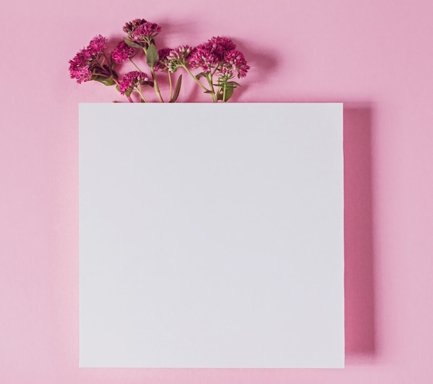 Pink flowers on pink background, text card with space for copy