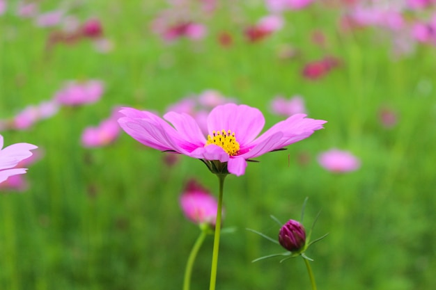 Pink flowers. summer background
