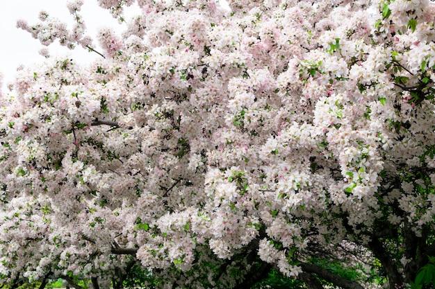 Розовые цветы текстуры фона