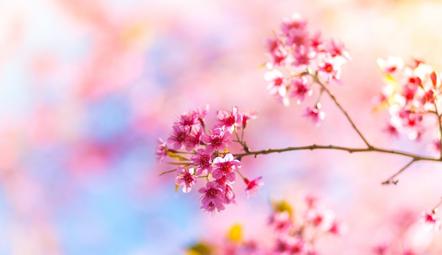 Pink flowers that are born from a branch of a tree