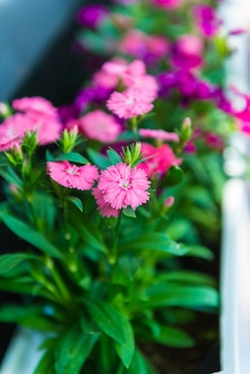 Pink flowers used to decorate