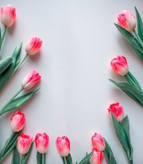 Розовые цветы на белом фоне. цветочная рамка из розовых тюльпанов.