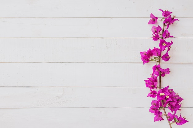 Pink flowers on white wooden background. flat lay, top view