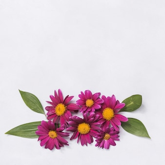 Pink flowers with leaves on table