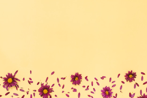 Pink flowers with petals scattered on table