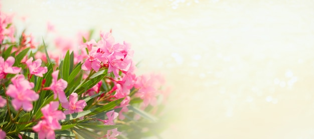 Pink flowers with sjiny golden bokeh banner copy space