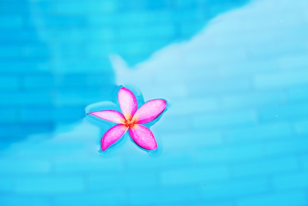 Pink frangipani in swimming pool with turquoise water