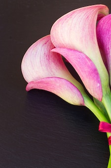 Pink fresh calla lilly flowers close up