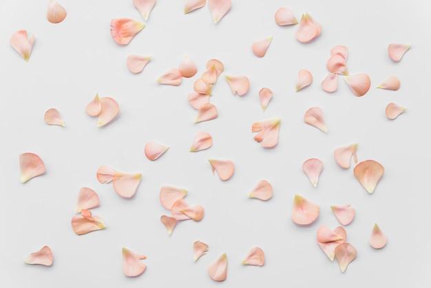 Розовые лепестки свежих цветов