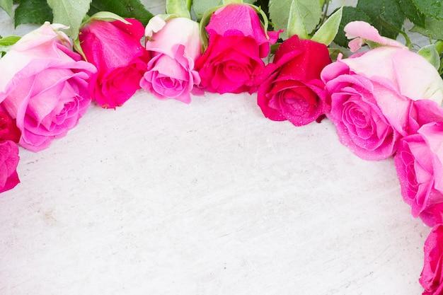 Pink fresh rose flowers buds border on white Premium Photo