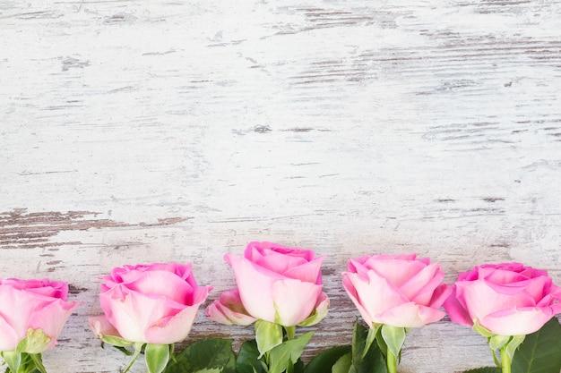 Pink fresh roses buds border on white