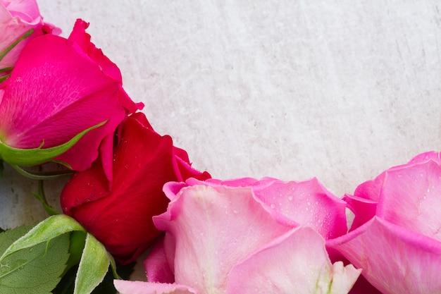 Pink fresh roses buds border on white Premium Photo