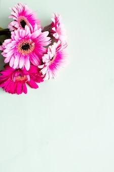 Pink gerbera daisy, wall for valentines day, birthday, anniversary or floral greeting card.happy mother's day greeting card with copy space, chamomile flowers