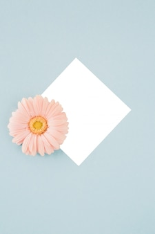 Pink gerbera flower in frame on blue
