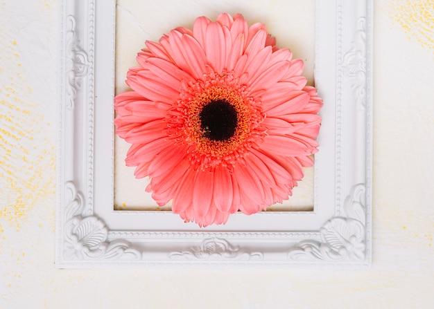 Pink gerbera flower in frame on table