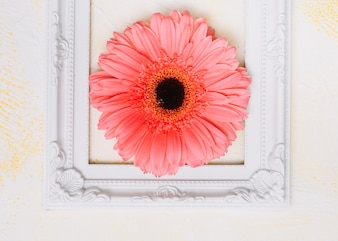 Pink gerbera flower in frame on table